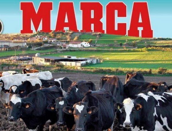 Κίκε Σετιέν. Από τις… αγελάδες στο «Καμπ Νου»